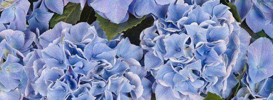Saxon Table Blue