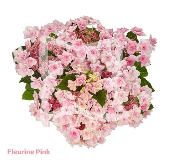 Fleurine Pink